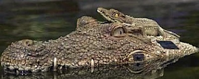 Saules krokodils