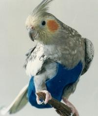 Putnu autiņbiksītes