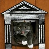 Greznās kaķu durtiņas