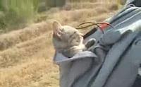 Ceļojošais kaķis
