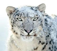 Mac OS X Snow Leopard ir klāt