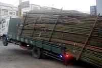 Skaties kā ātri izkraut bambusu vezumu