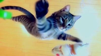 Cik augstu spēj uzlēkt kaķis?